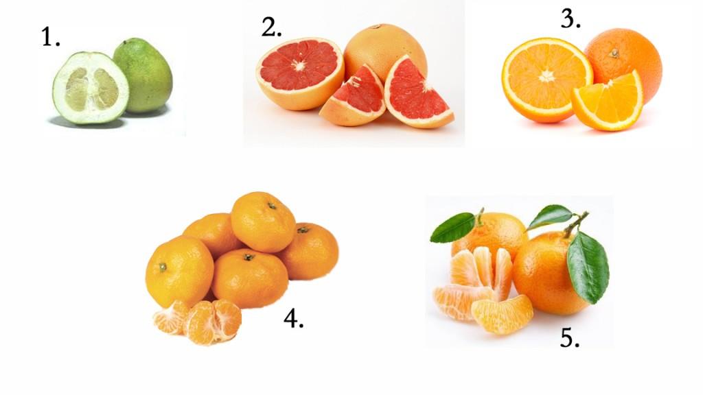 Sinaasappel of appelsien?