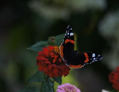 Mini-onderzoekje 13: vlinder